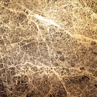 Neuronal Forest 05