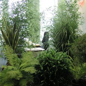 Euphorbia_Edificio Trianon, Frankfurt