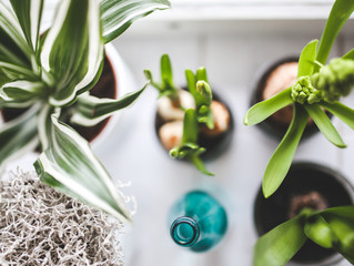 How Indoor Plants Help You Thrive!