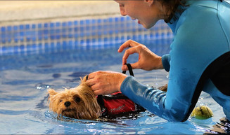 Fisioterapia para mascotas