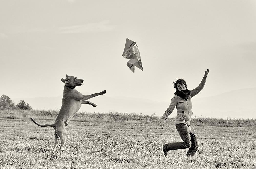 Foto: perro saltando