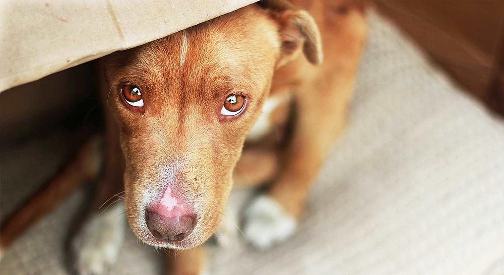 Foto: perro estresado