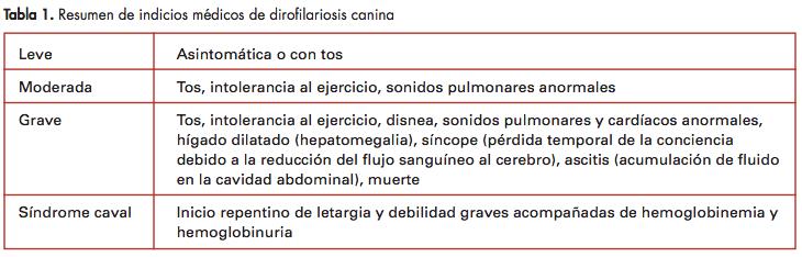 Foto: indicios medicos de dirofilariosis