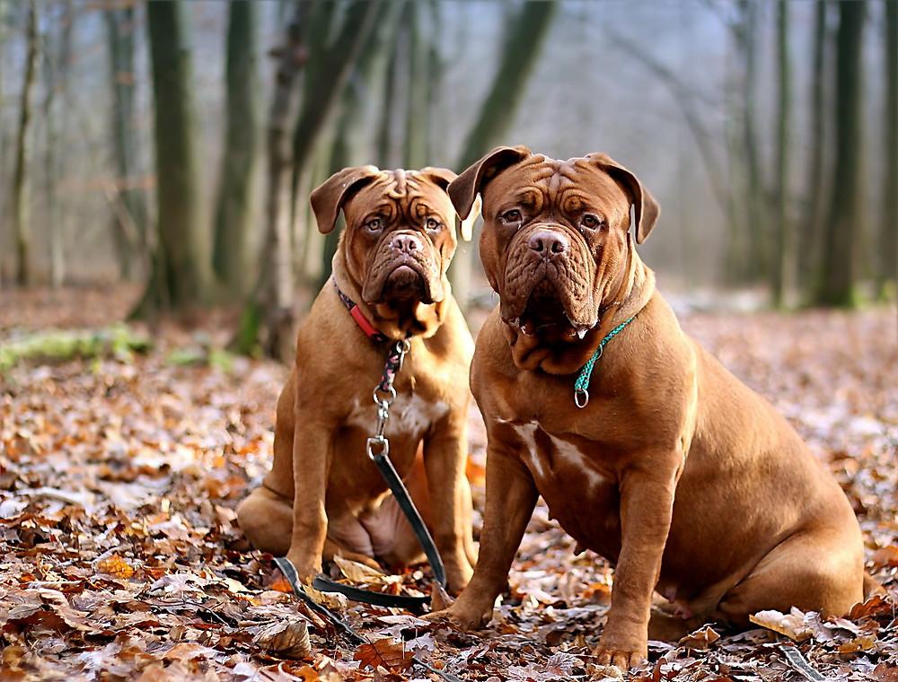 Foto: perros atentos