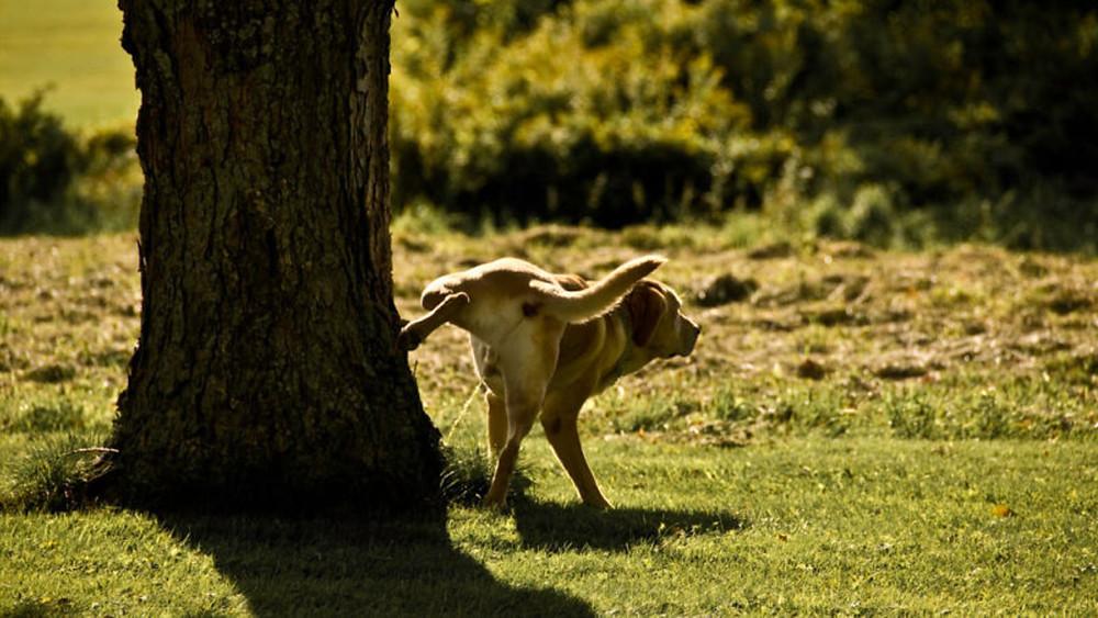 Foto: perro haciendo pis