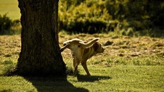 Urolitiasis en el perro