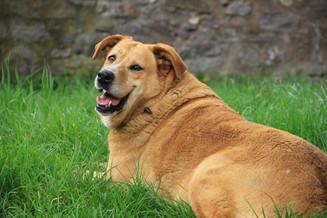 Mi perro tiene sobrepeso, ¿qué puedo hacer?