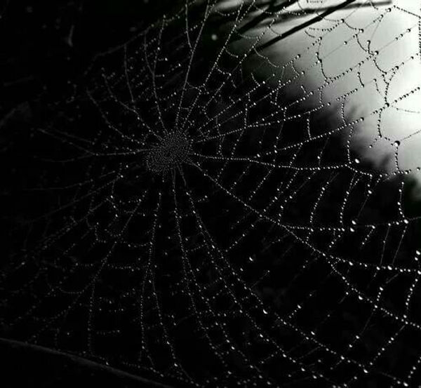 Blackspiderweb.jpg