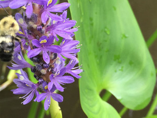 Bee Kind to Pollinators