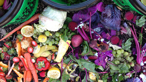 Food Waste Dos and Don'ts