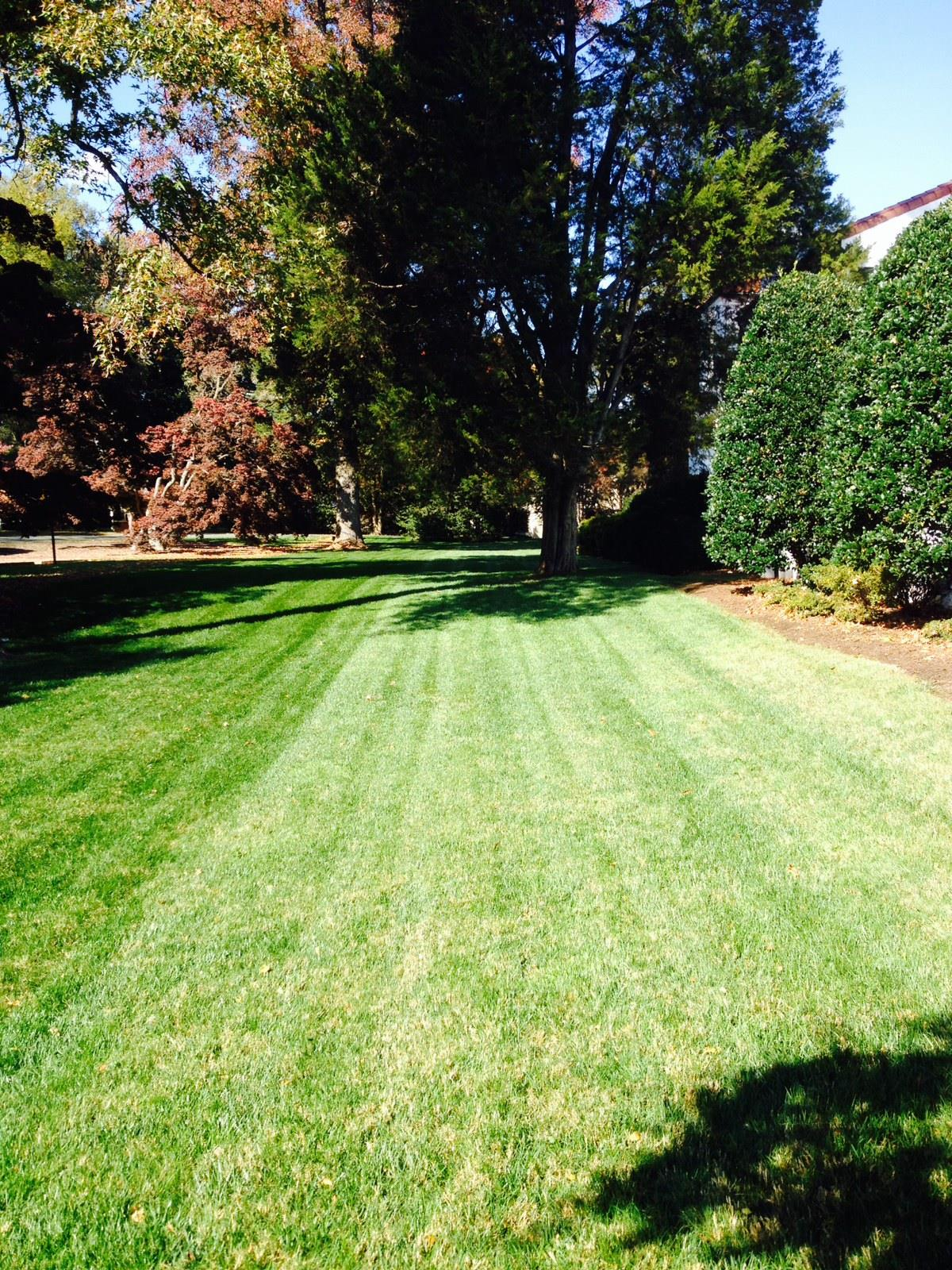 Richmond Lawn
