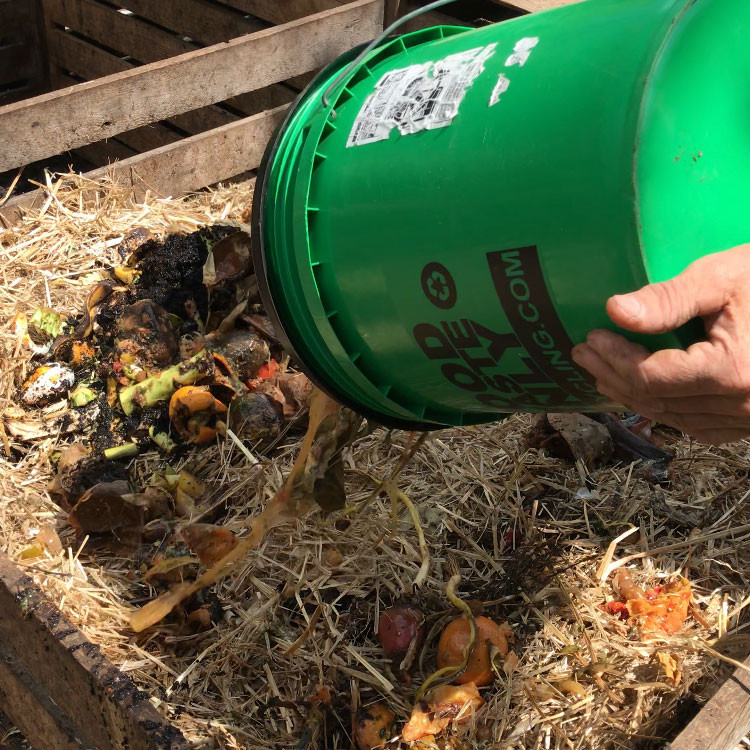 Adding food waste to your compost bin