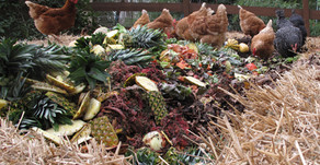 How to Compost Food Waste