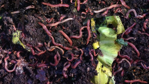 Why Compost with Worms?