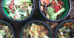 Composting Begins in the Kitchen