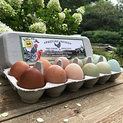 egg_carton_sq.jpg
