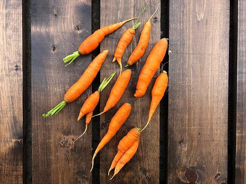 Orange Carrots; Organic