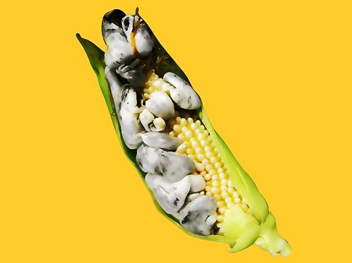 Corn Smut (Huitlacoche)