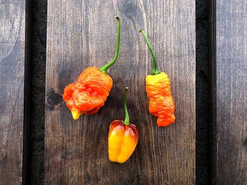 Rare Hot Peppers; Organic