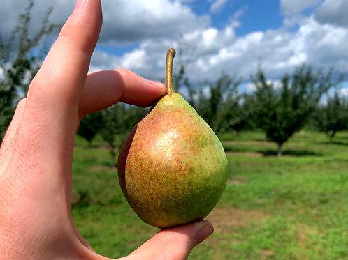 Clapp Pear; Biodynamic