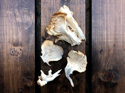 Hen of the Woods Mushrooms; Wild