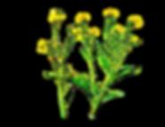 Organic Flowers.png