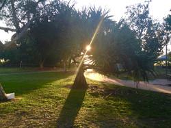 Sunrise through the pandanus