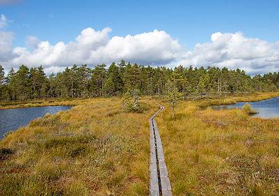 Knuthöjdsmossen Naturreservat