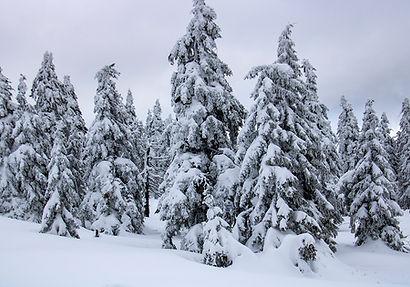 vereiste Bäume - Brocken-Wanderung