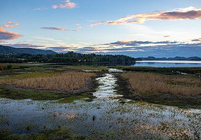 Hammervatnet Naturreservat