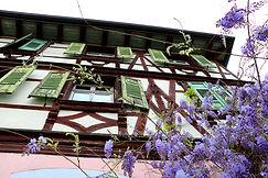 Blauregen in Gengenbach