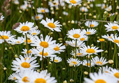 Wildblumen - Eselsburger Tal