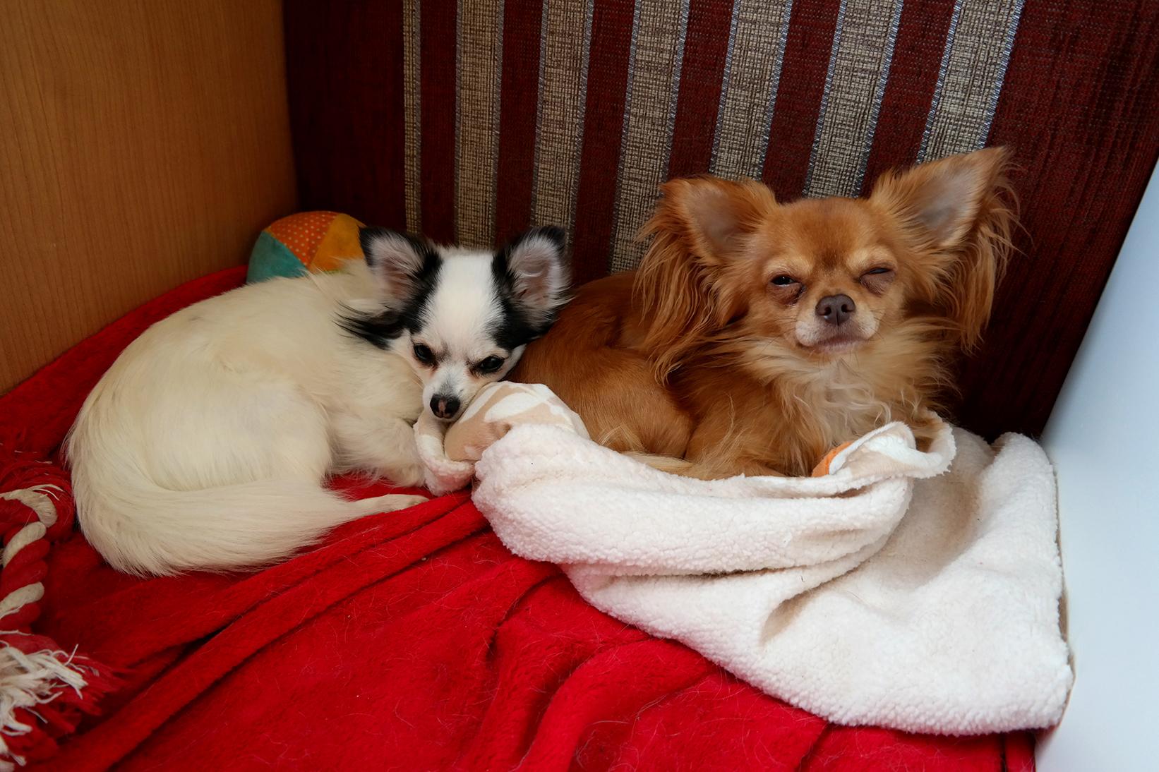 Hunde im Wohnmobil :)