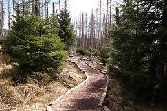 Wanderweg Oderteich, Nationalpark Harz
