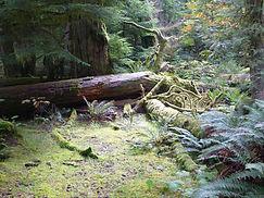 Mc Million Provincial Park, Vancouver Island