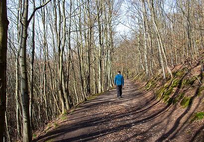 Weg zur Burg Falkenstein