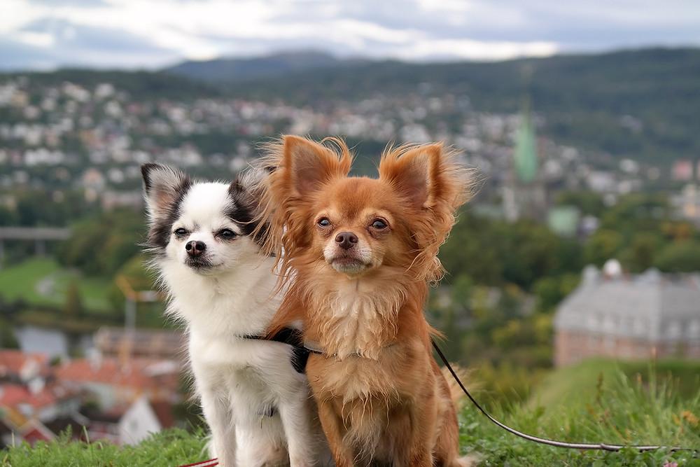 Mit dem Hund nach Norwegen