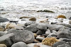 Fossilien in Lyme Regis