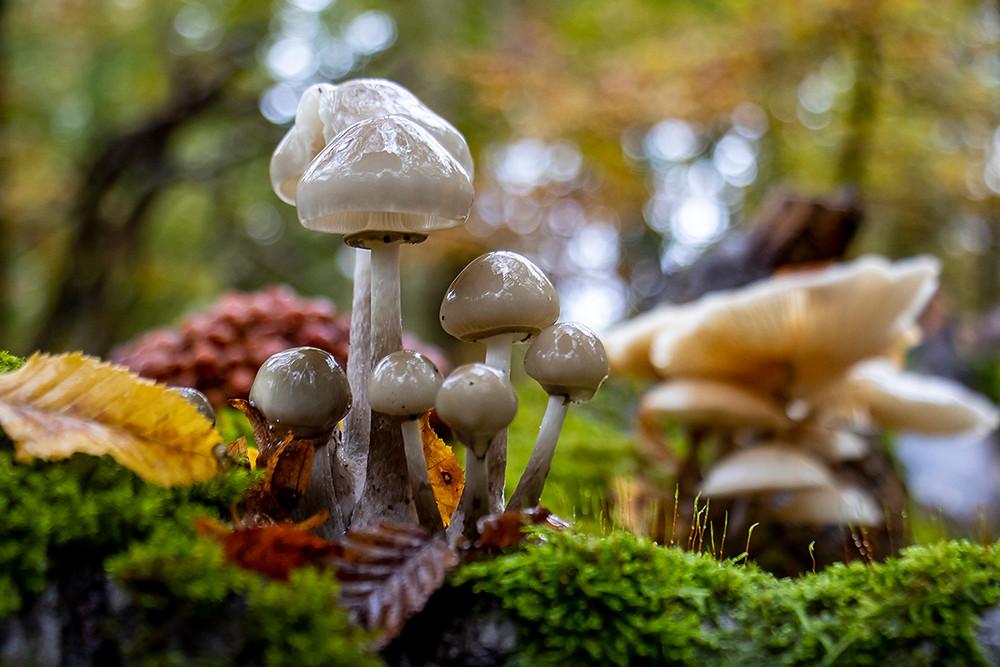 Pilze im Wald bei Eisenach