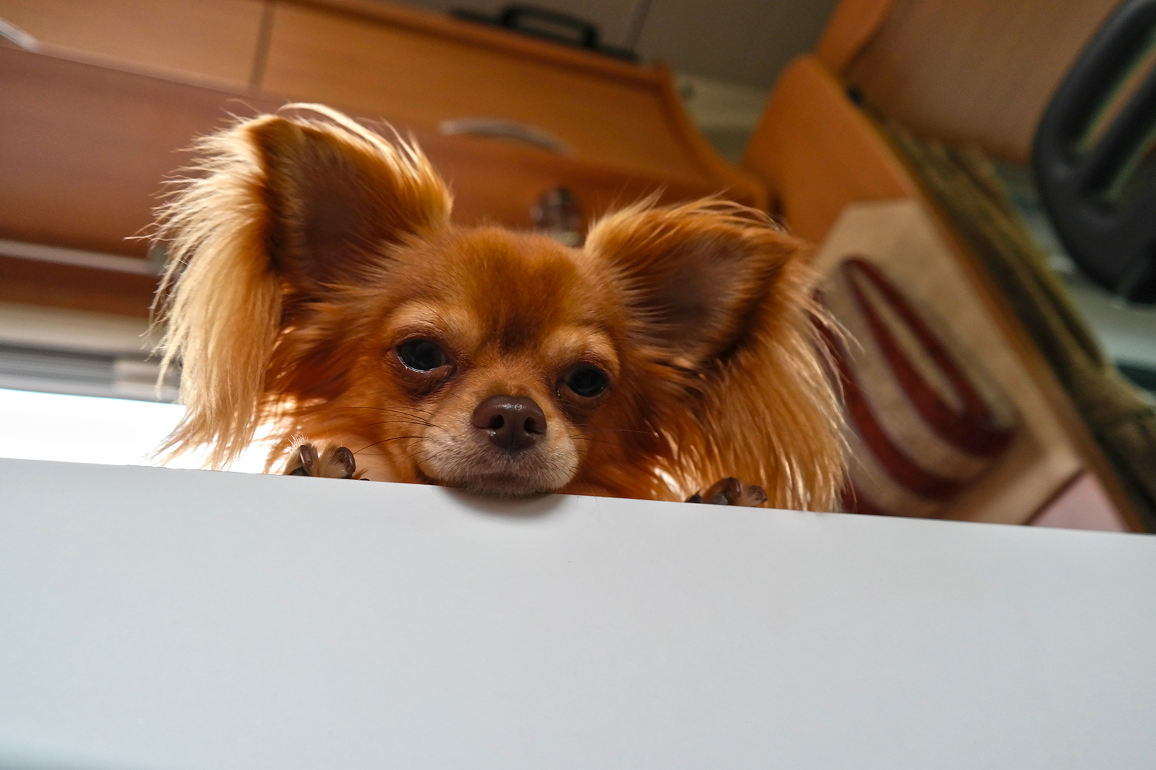 Baili sucht nach dem Fressen