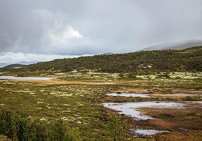 Gebiet des Dovrefjell-Nationalparks