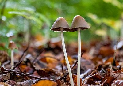 Pilze im Wald bei der Burg