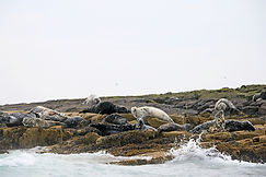 Robben Farne Islands