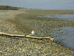 Strand bei Parksville, Vancouver Island
