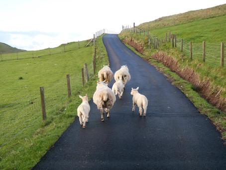 unsere Tipps für eine Schottland-Reise mit Wohnmobil und Hunden