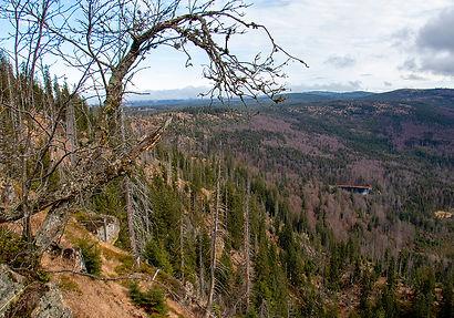 Blick auf den Rachelsee vom Waldschmithaus