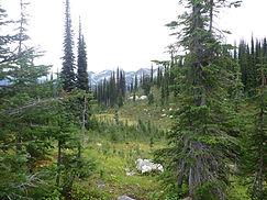 Mount Revelstoke Nationalpark, Kanada