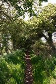 Creel Path bei St. Abbs Head