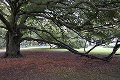 Baum in Malmö, Schweden