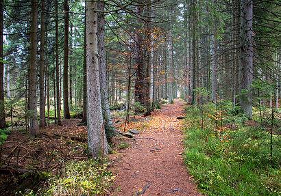 Wanderweg auf den Großen Rachel